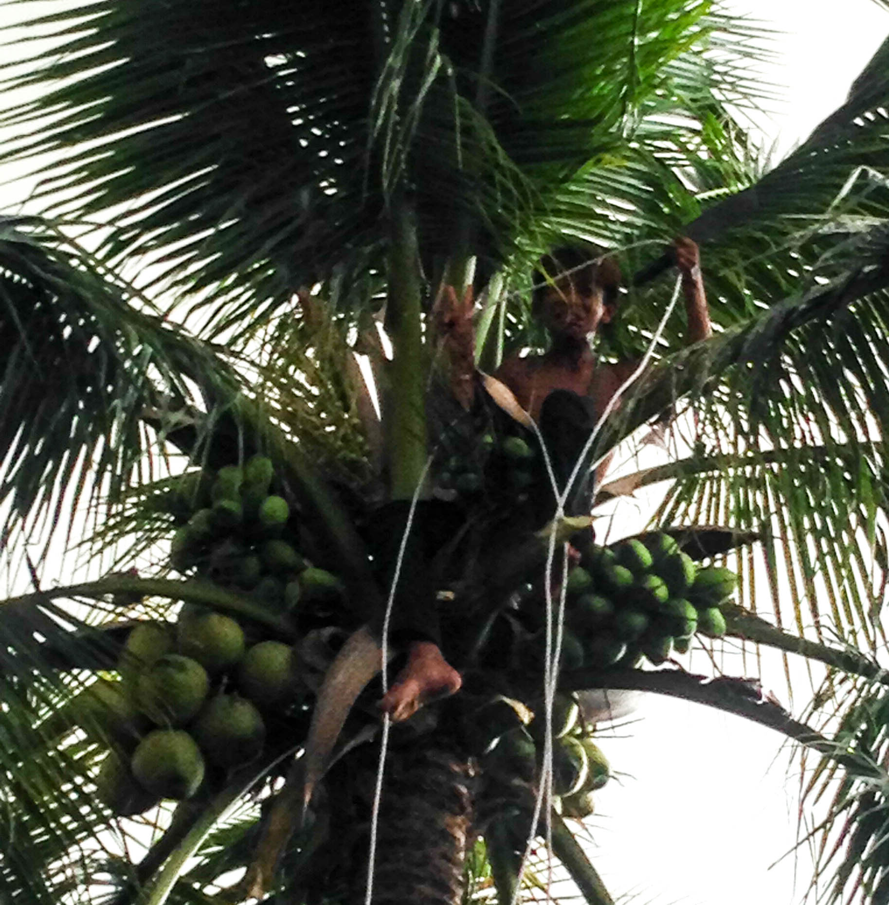 The Coconut Kids