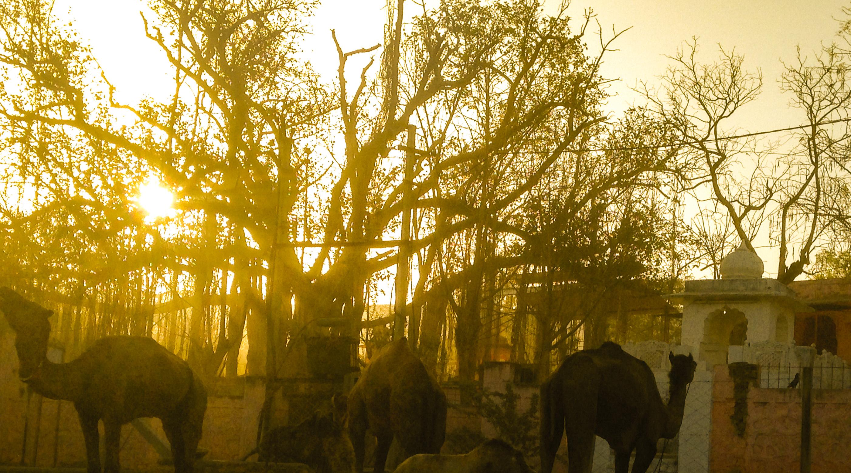 Pushkar Dawn